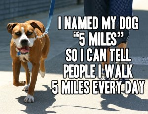 funny-quote-5-miles-dog-walking-name